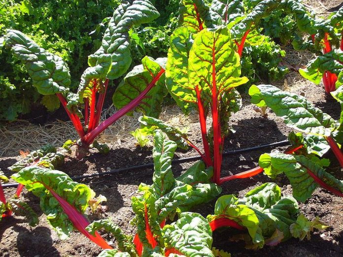 warzywa najlepsze najzdrowsze